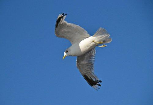 Итоги тематического конкурса «Птицы в полете»