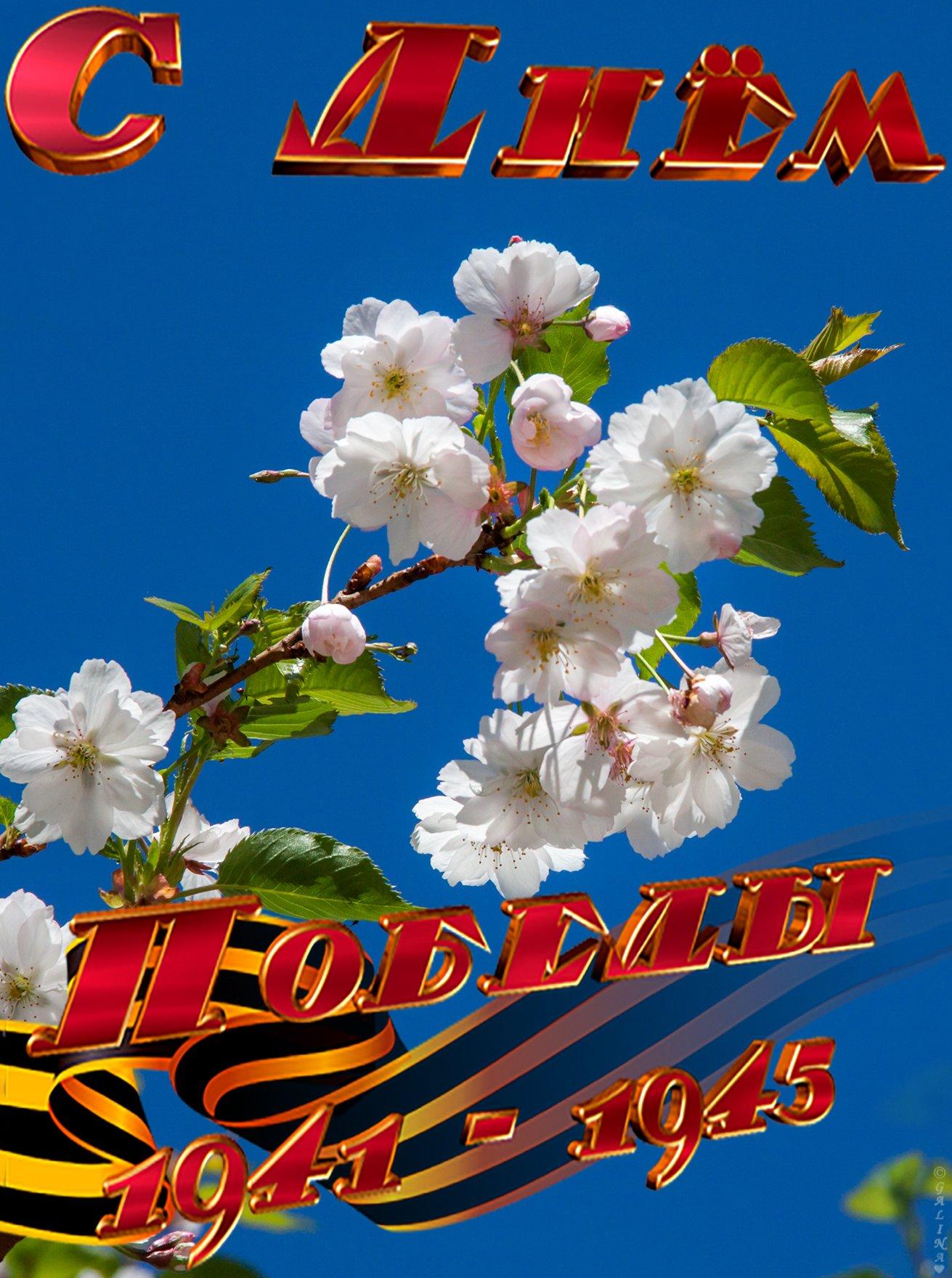 рамках с праздником победы картинки фото выборе тыквы