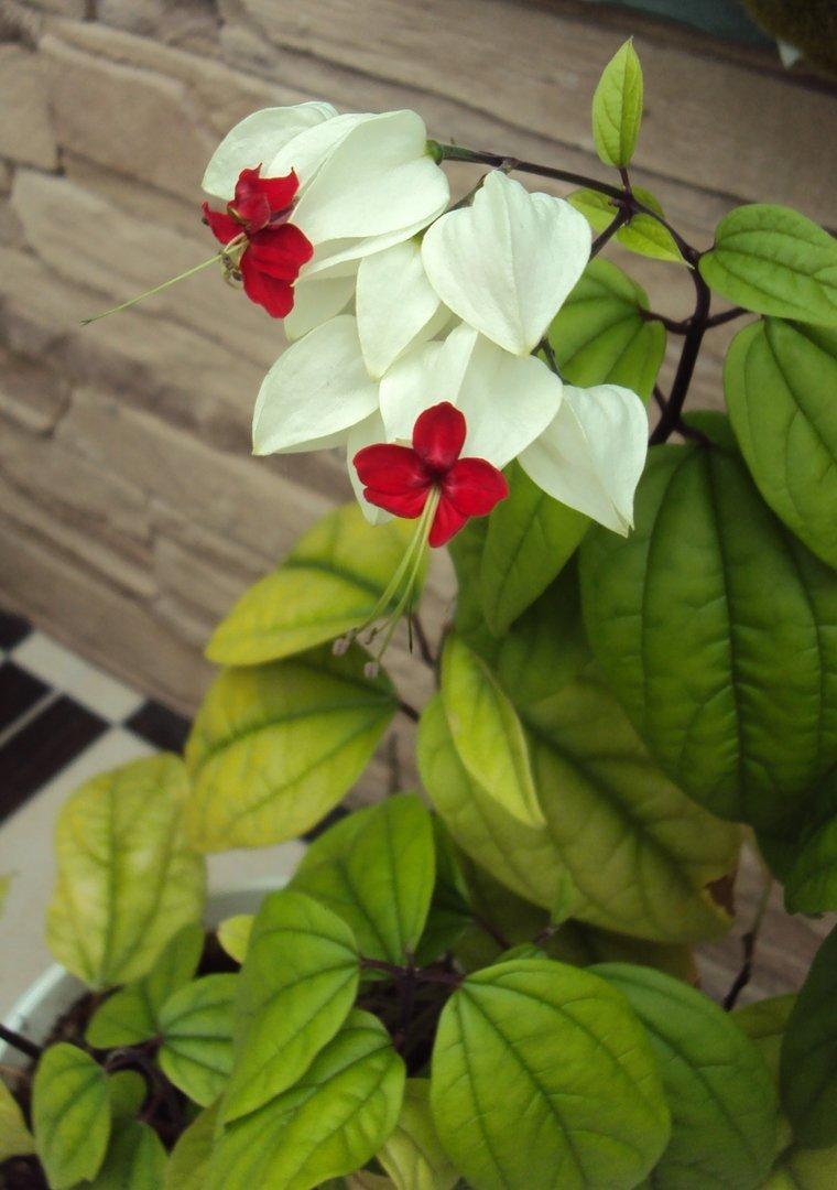Цветочек в цветочке