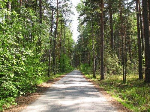 Лес да лес кругом
