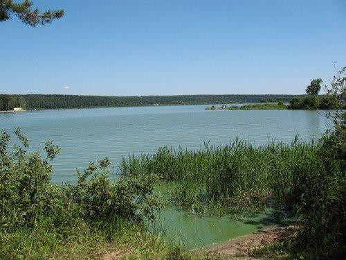 На берегу зелёной реки