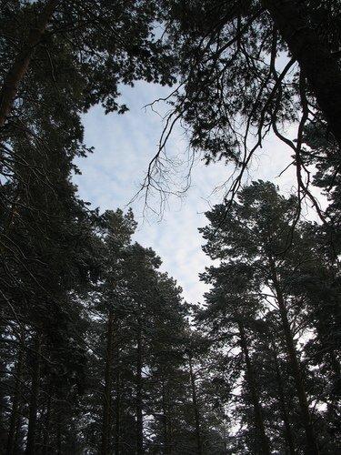 """В тёмном лесе ..."""