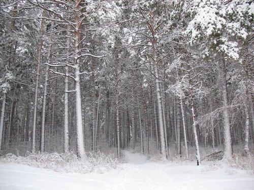 В лесопарковой зоне