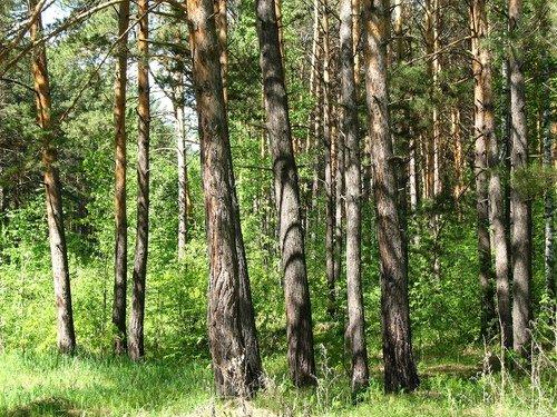 В солнечном лесу