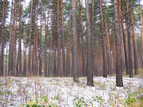 Октябрь в лесу