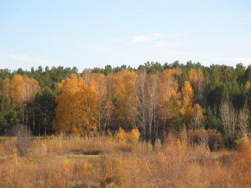 Жёлто-зелёный лес.