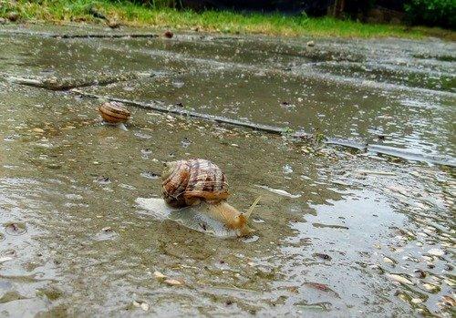 Прогулка после дождя