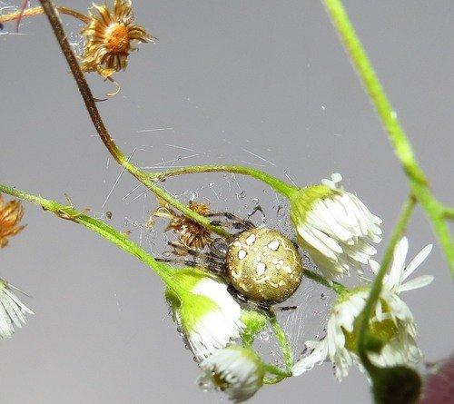 Найдите паука... )