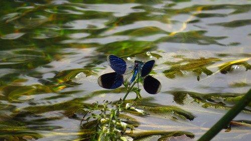 Стрекоза над речкой тихой и порхала и кружилась