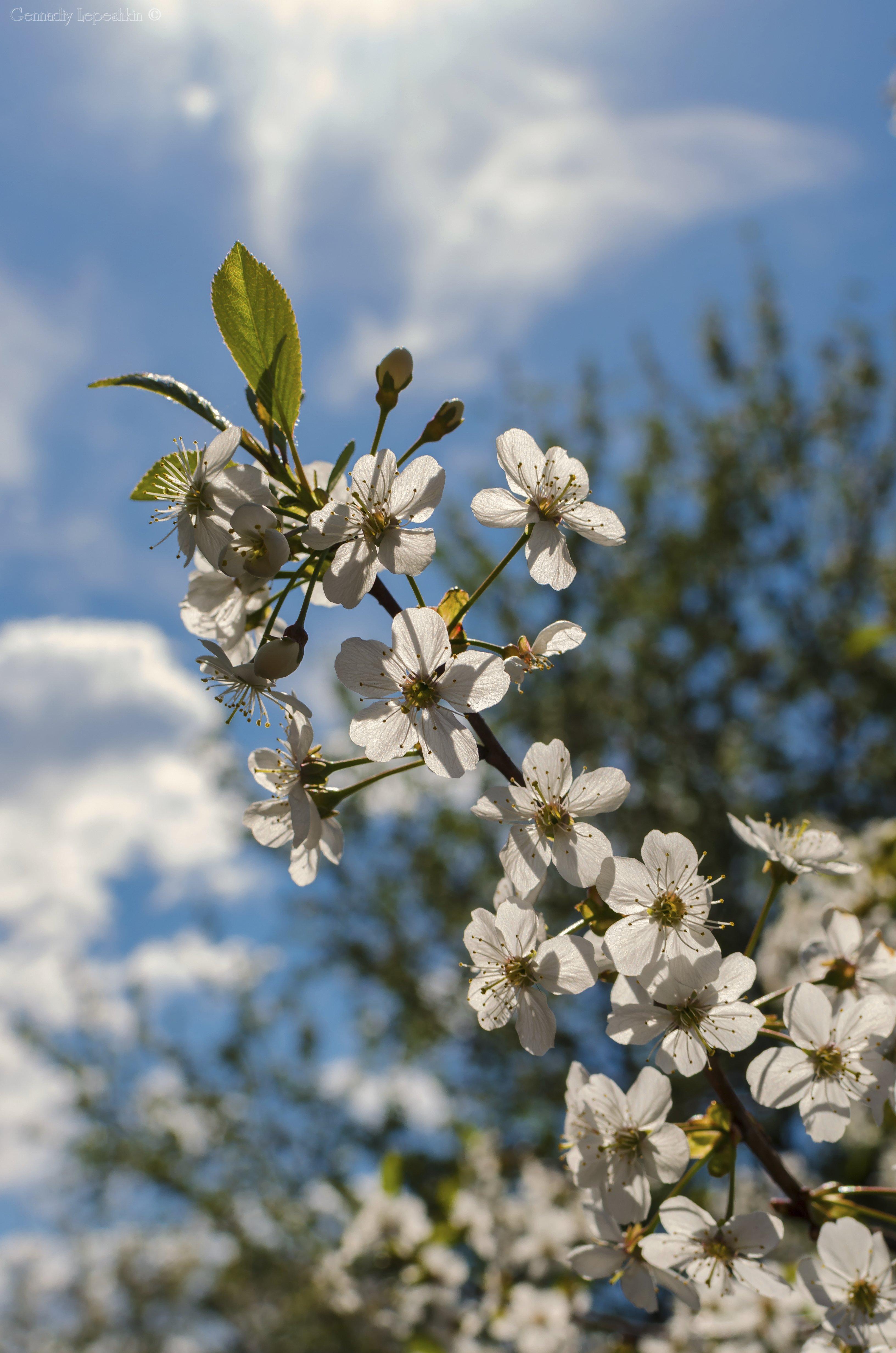 есть среди фотографии майского цветения настоящие косплеерши