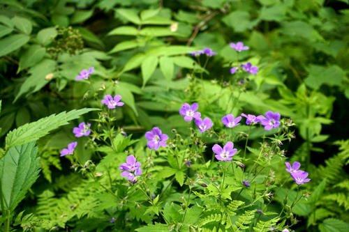 Скромненький синий цветочек