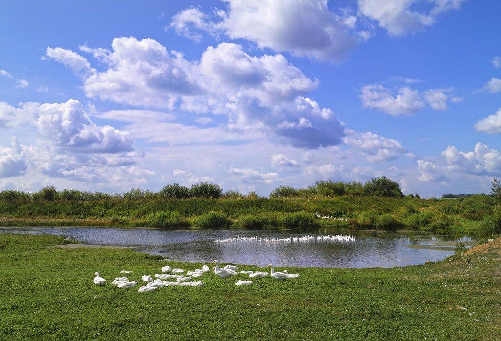 Гусиное озеро.