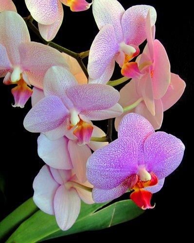 Избранный цветок