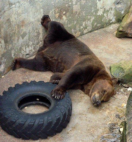 А мне лежать и спать охота!...