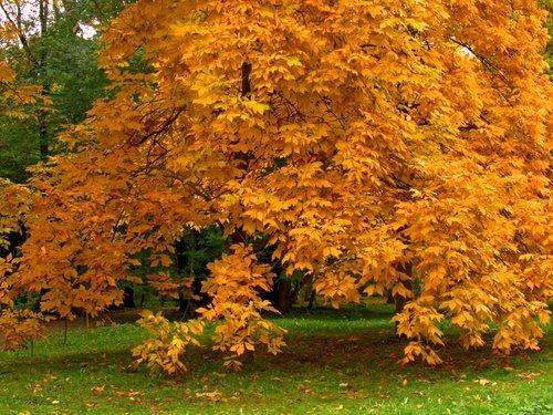 Осень в Ботаническом саду-2