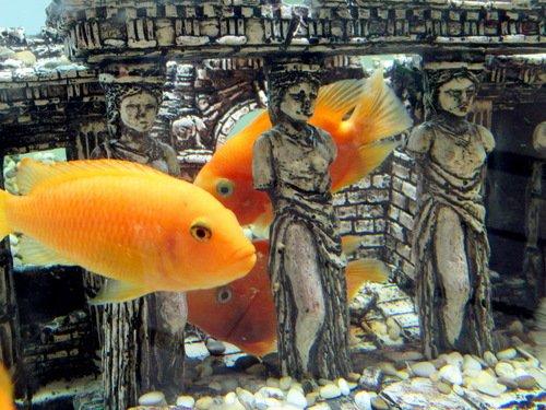 Рыбы и кариатиды