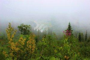 В густом тумане