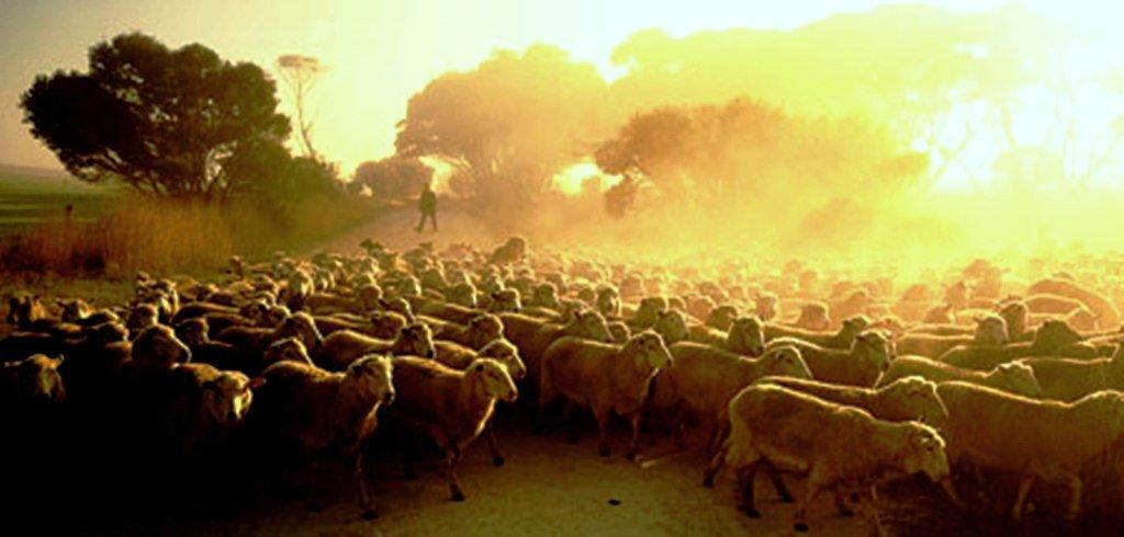Исчезновение лесов Австралии — это примерно то же самое, как у пылесоса перерубить шланг ...