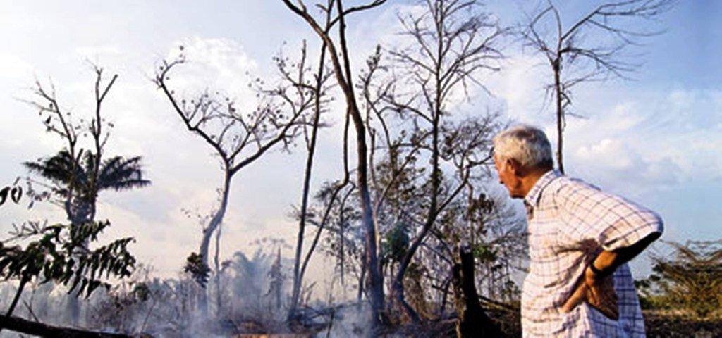 Уничтожение лесов в Бразилии может стать причиной ураганов