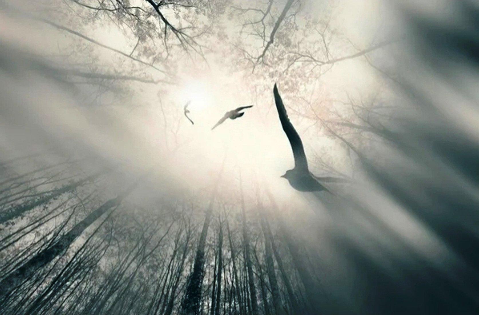 картинки лети душа