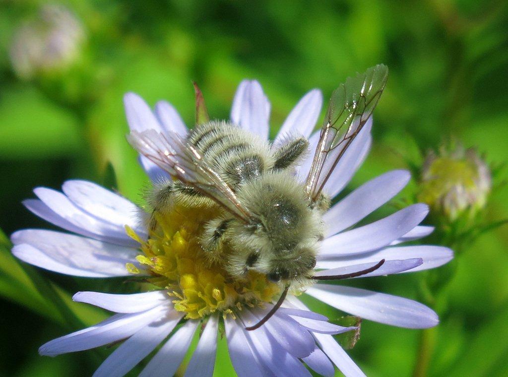 картинки пчелы на липецк зимы
