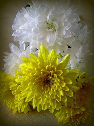 Желтые и белые