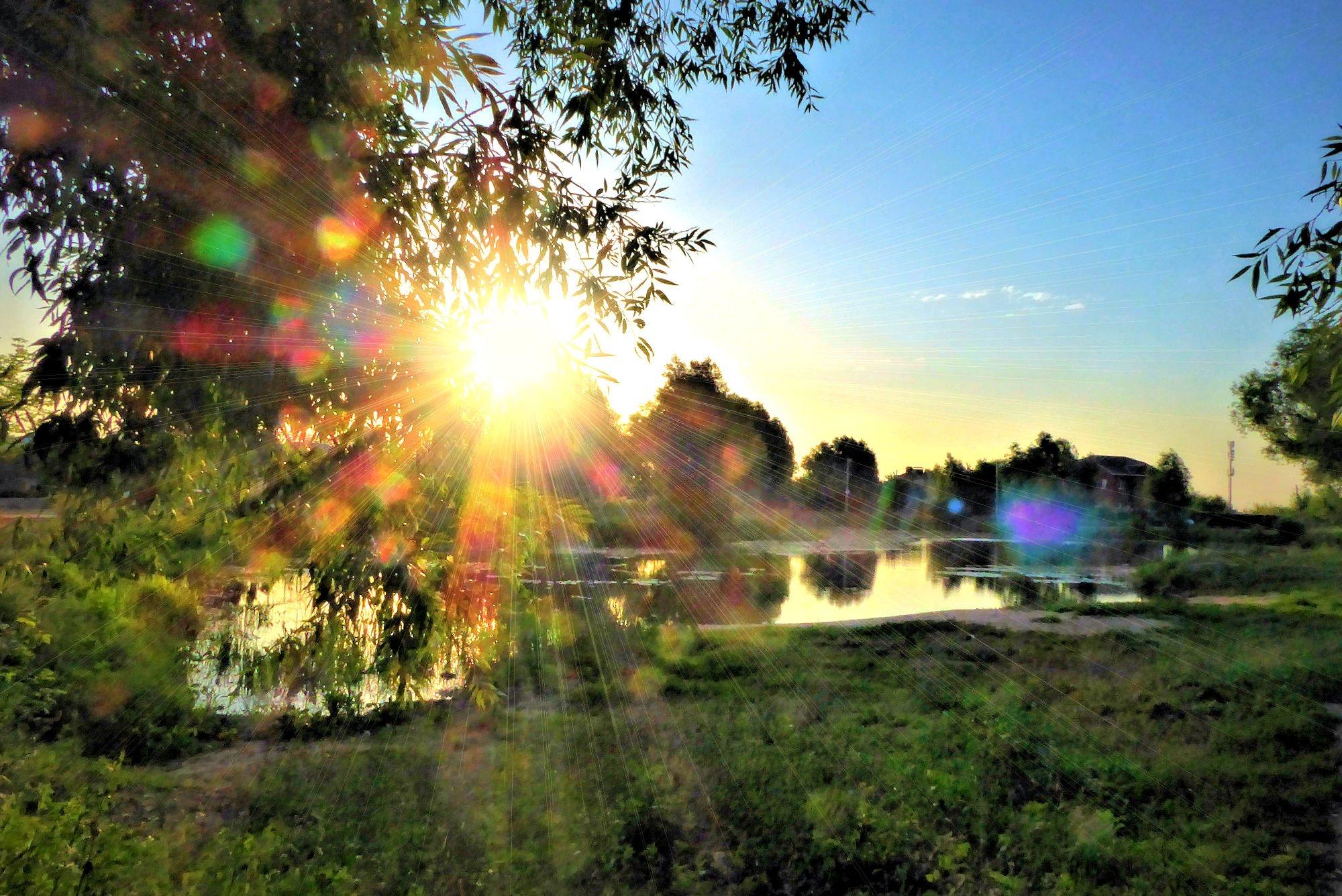 утро лето рассвет солнце красивые картинки феврония символ семейного