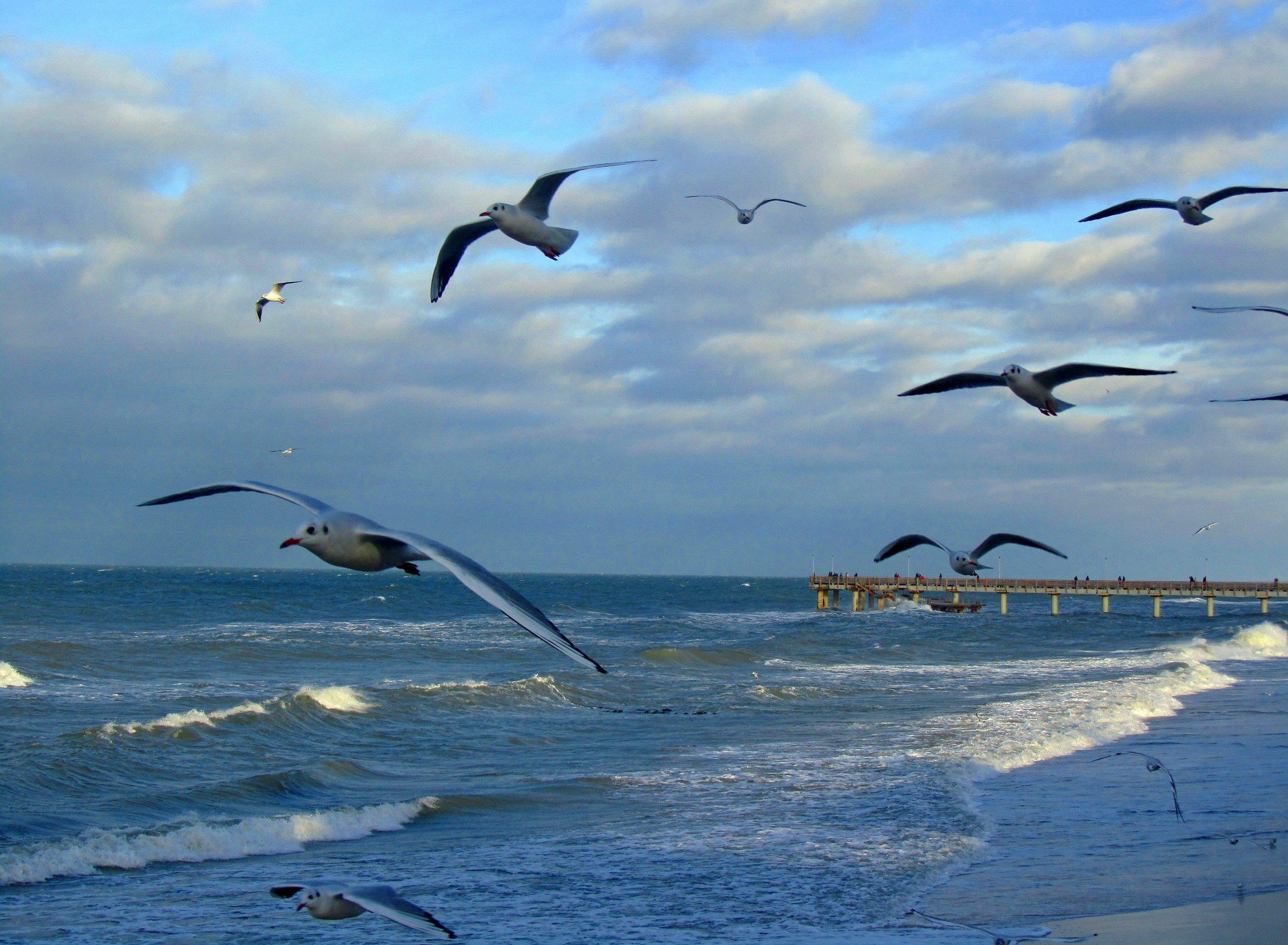 счастье, пусть, чайки над морем картинки щелкаем правой кнопкой