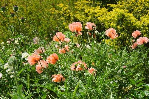 Цветы Монмартра