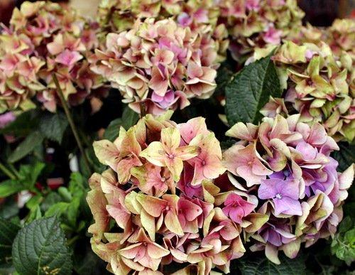 Какого цвета эти цветы?