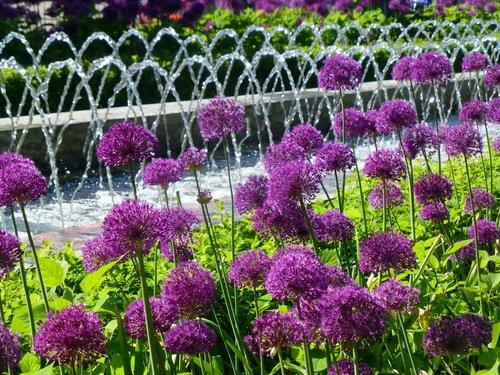 Луковый фонтан