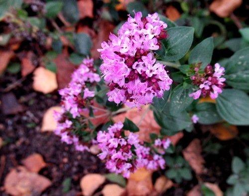 Последние цветы осени...