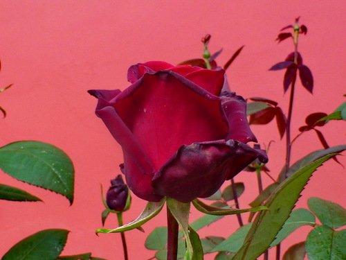 Красная на красном - для дам прекрасных!