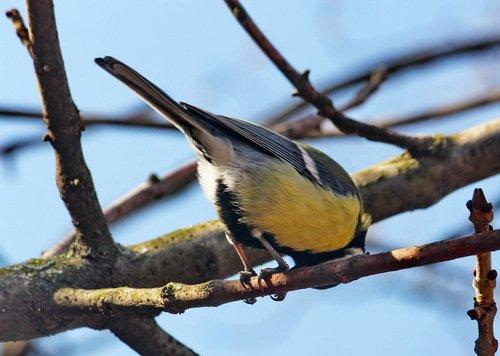 Птичка на синичьих ножках, повернись к лесу задом, а к нам передом!
