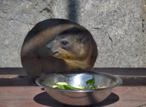 Завтрак на одного