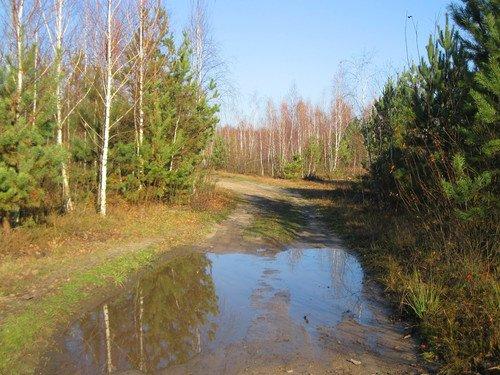 По лесной дороге в ноябре