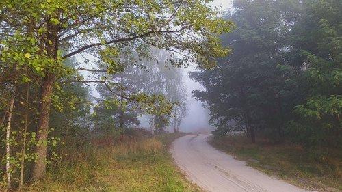 Грибной туман зовет в дорогу...