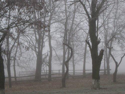 Еще о январском тумане...