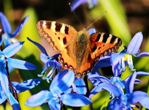 Редкая встреча для бабочки