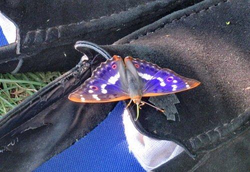 Чудо-бабочка