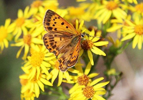 солнечный этюд с бабочкой