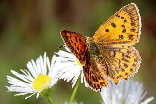 летняя зарисовка с бабочкой