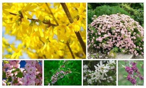 Для весеннего цветения