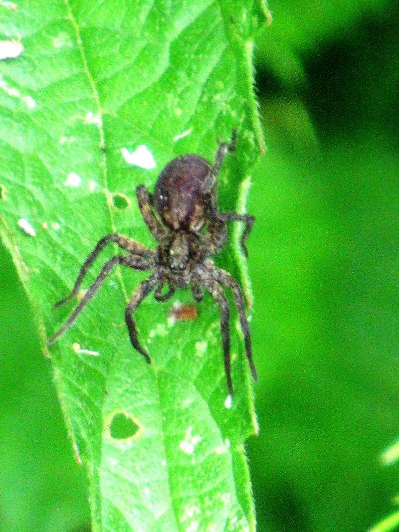 певец годами фото паука в зауралье его недостаток, его