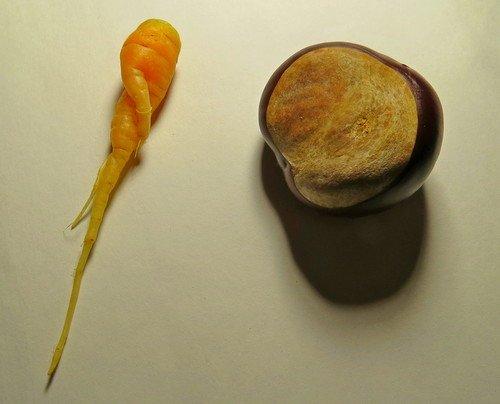 Морковка и каштан