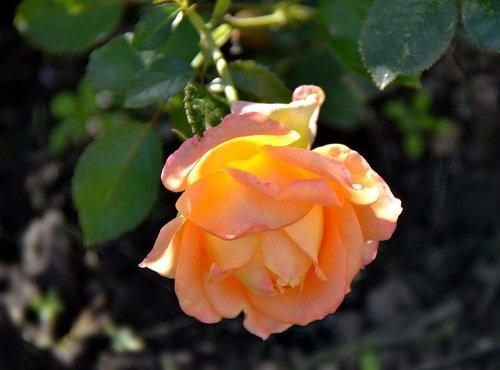 Золотое свечение красоты