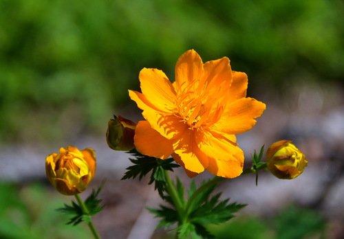 Жаркий  цвет