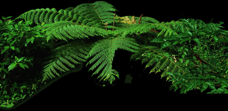 тропический лес картинка на прозрачном фоне