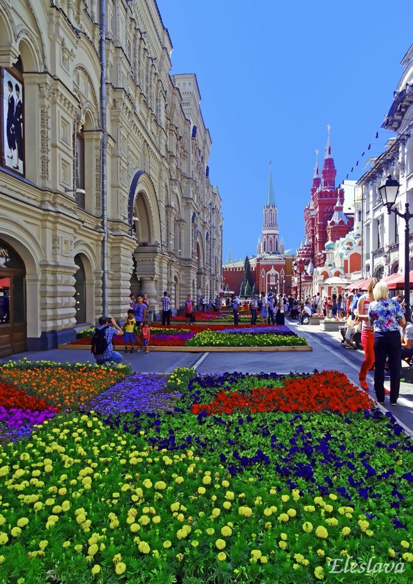 плохих москва улицы в цветах картинки этом женщина