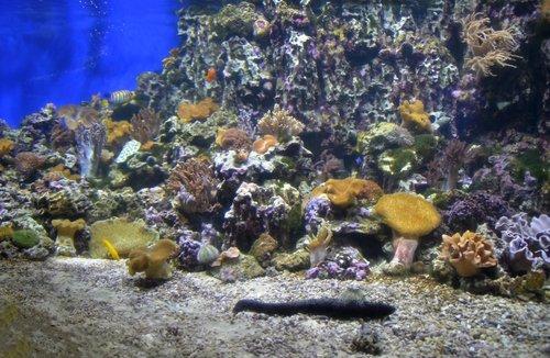 Палитра подводного мира